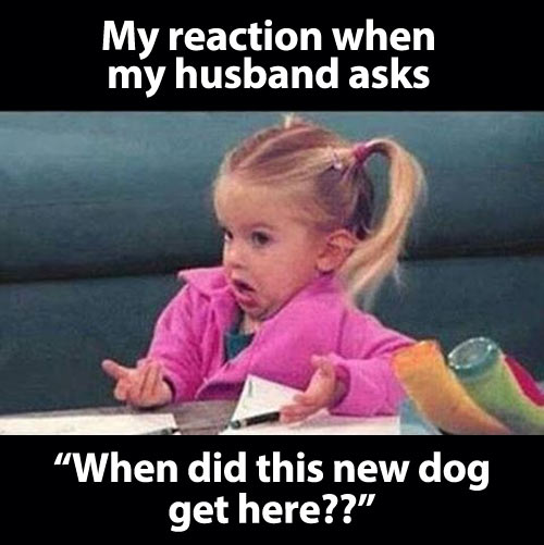 funny-girl-husband-new-dog