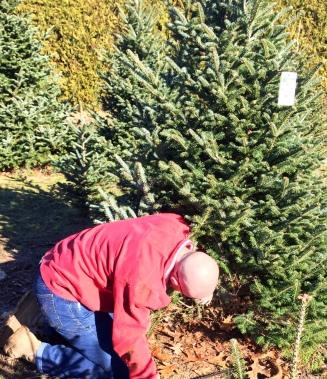 xmas tree cut